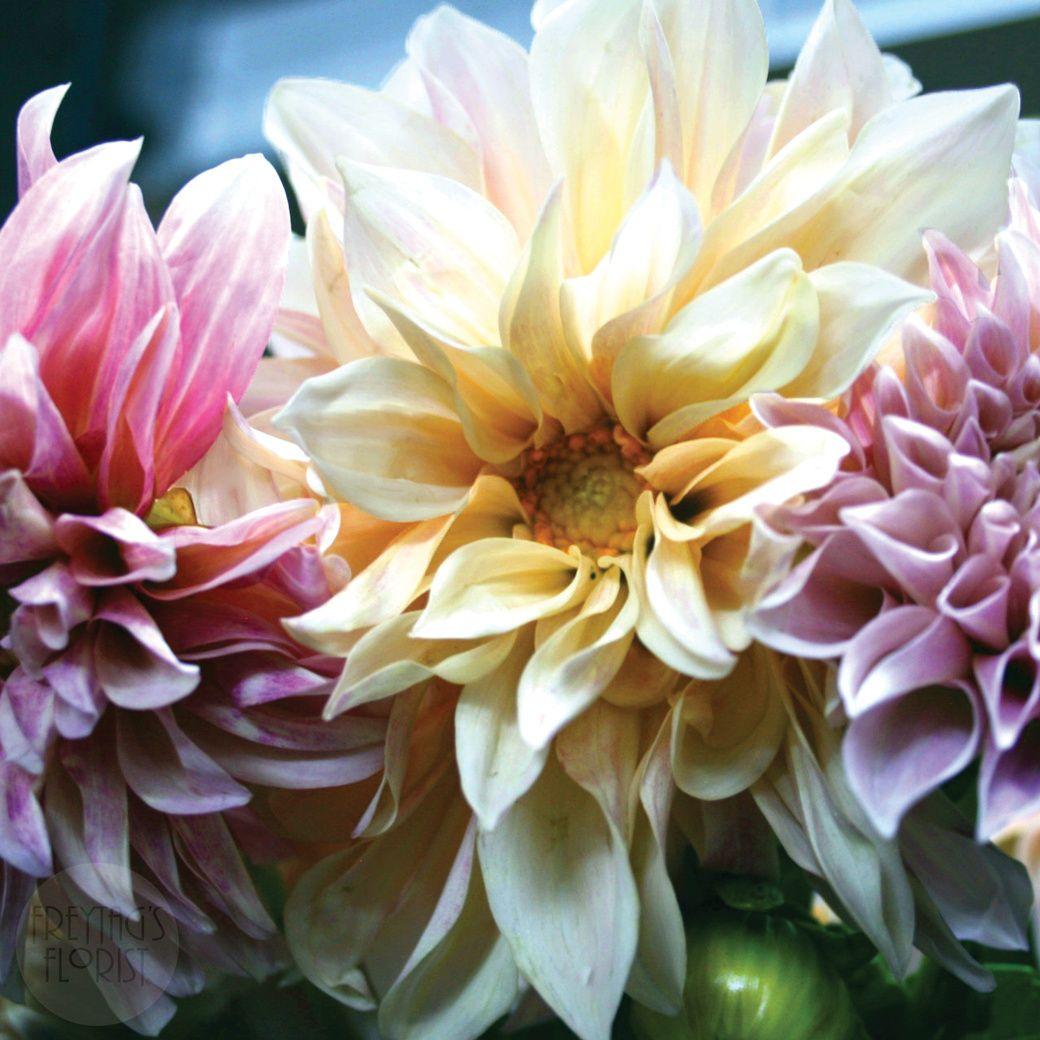 Dahlias flower delivery austin florist flowers
