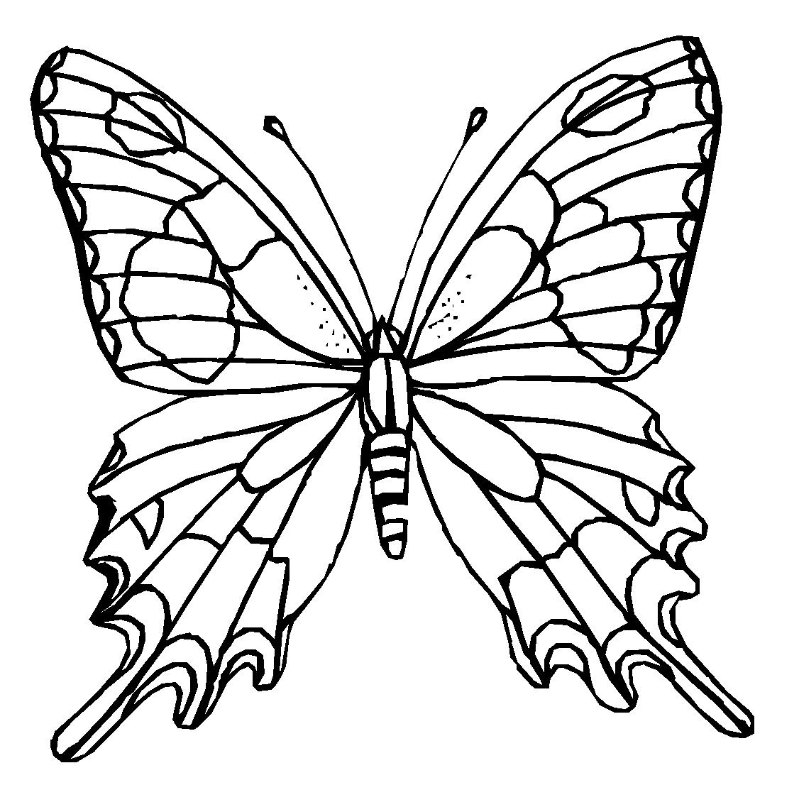 Картинки бабочка для детей черно белые