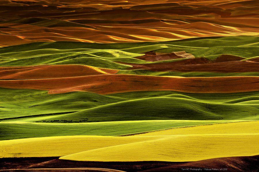 "Palouse Patterns  by   Noppawat ""Tom"" Charoensinphon ( Steptoe Butte State park in Palouse, WA )"