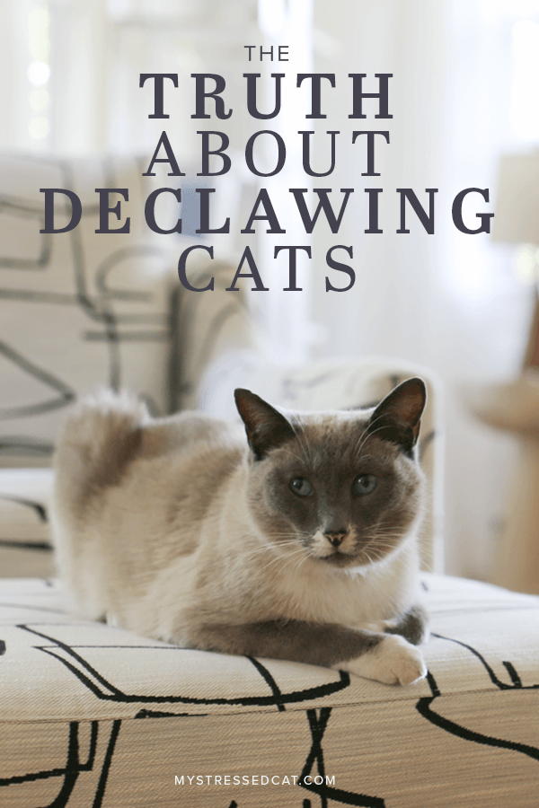 Stop Declawing Cats And Do This Instead Declawing cats