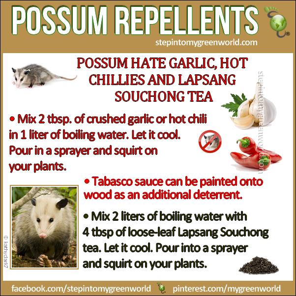 possum repellents - - Possum Repellents - Prepper Stuff Pinterest Gardens, Yards And