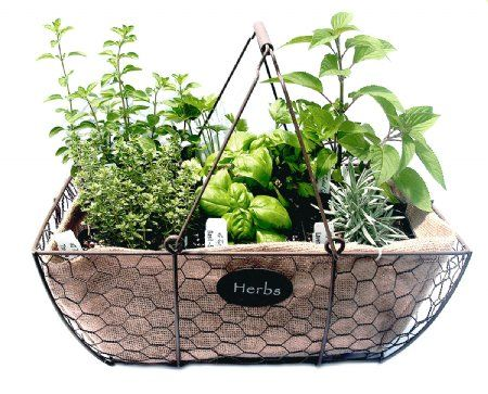 Wire Gathering Basket 6 Herb set~ Love herbs as a gift that can be ...