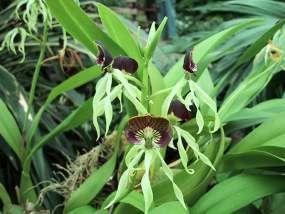 Orchideeenkwekerij De Orchideeen Hoeve