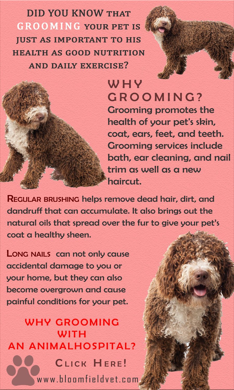 Grooming Services For Pets Maintain Their Cleanliness And Their Overall Health And Well Being Learn More Pets Petdog Animal Hospital Pet Grooming Pet Health