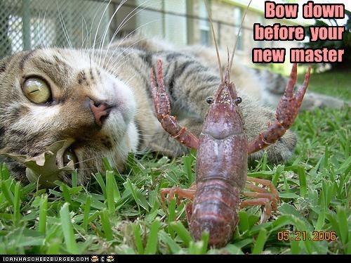I Can Has Cheezburger? - Cats - Page 4 - Lolcats n Funny Pictures - funny pictures - Cheezburger