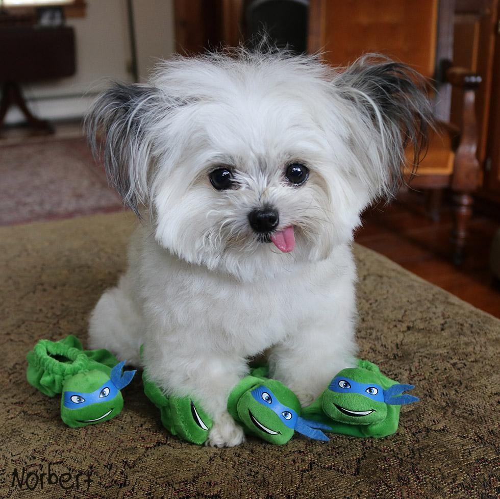Norbert On Cute Baby Animals Cute Animals Puppies
