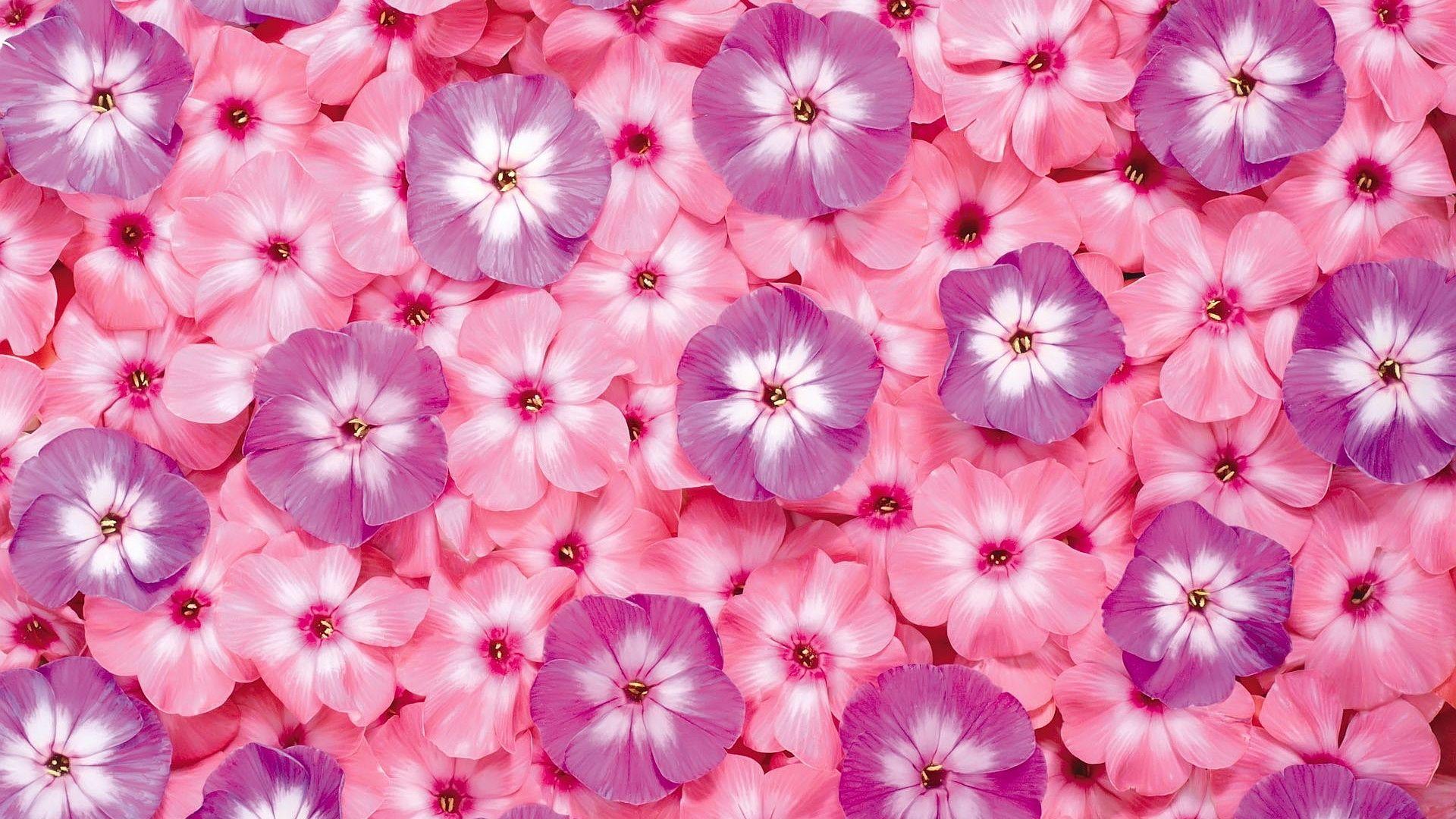 Pink Flower Wallpaper 1080p For Desktop Wallpaper With Images