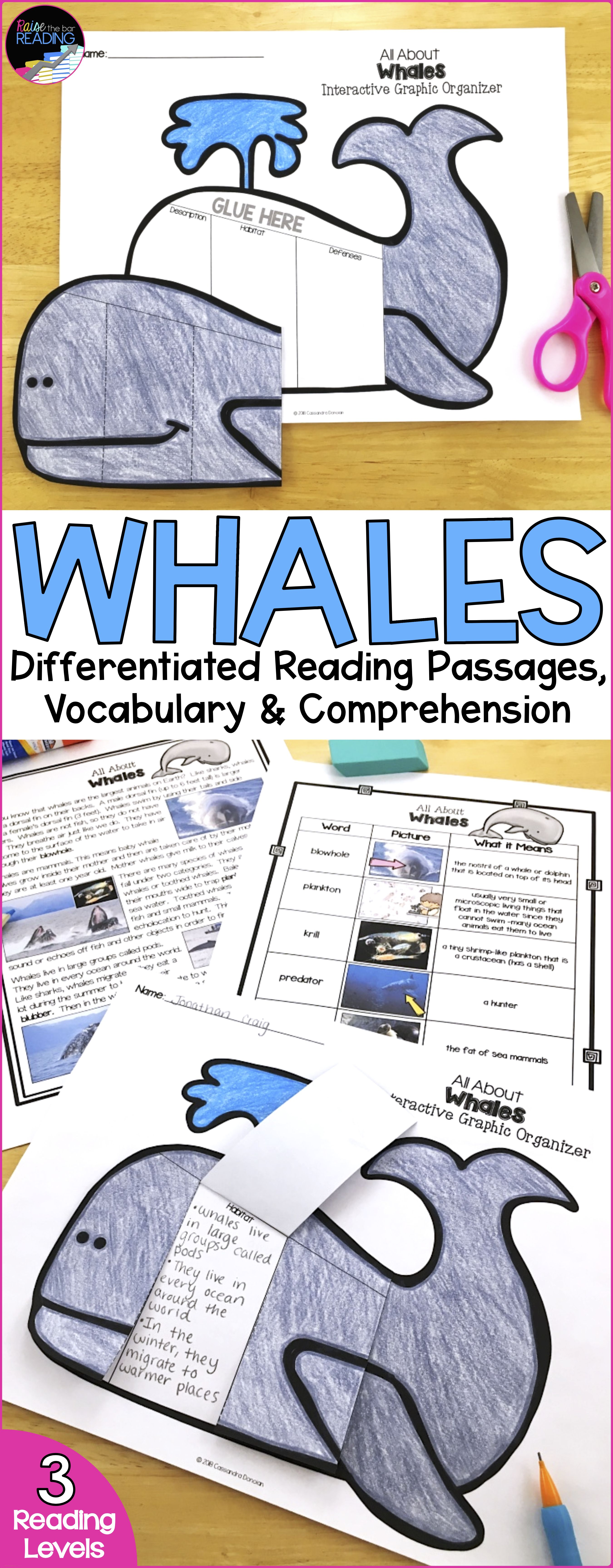 Ocean Animals Reading Whales Differentiated Reading Passages Amp Comprehension