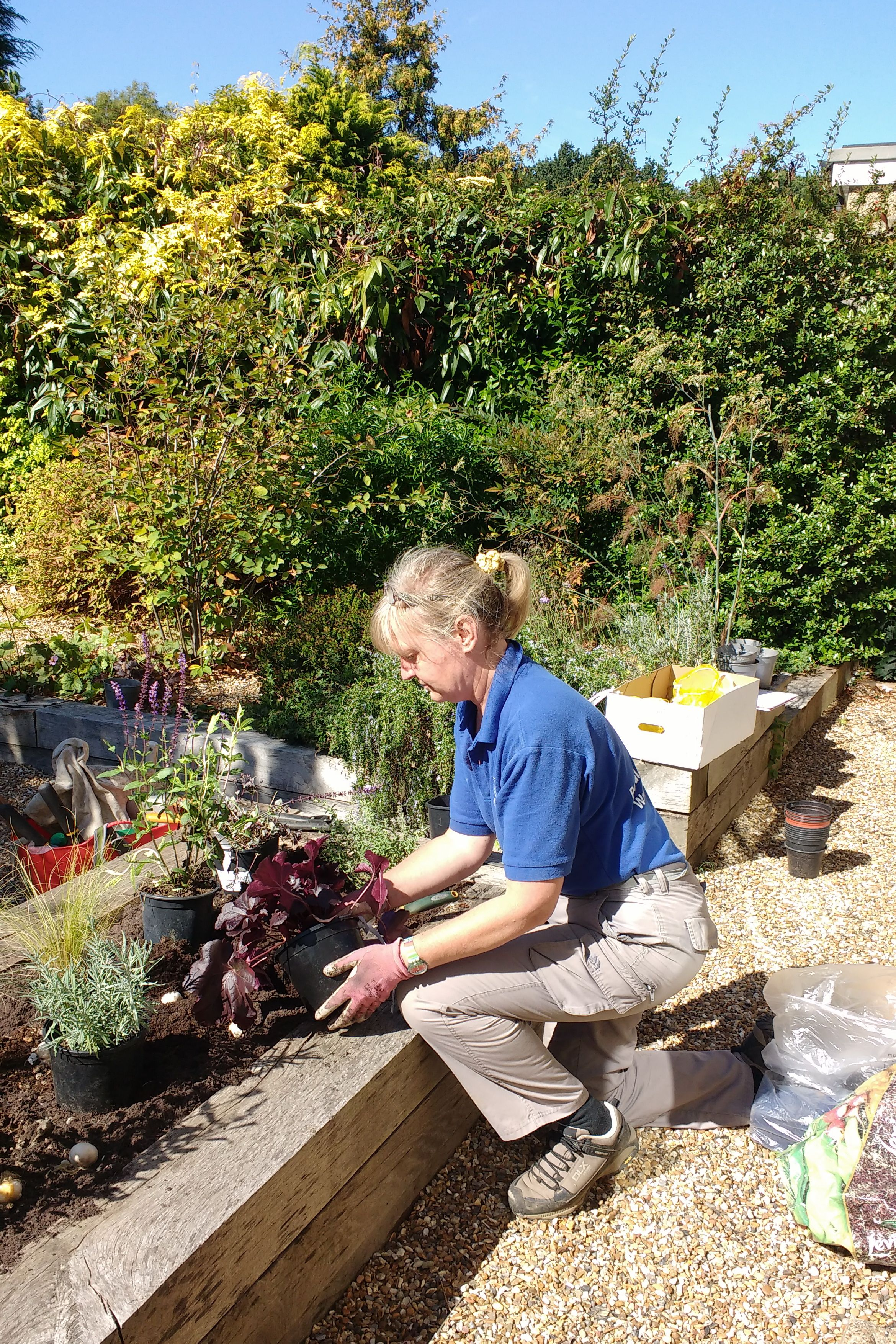 Rhoda Maw planting up a Raised Bed. Garden services