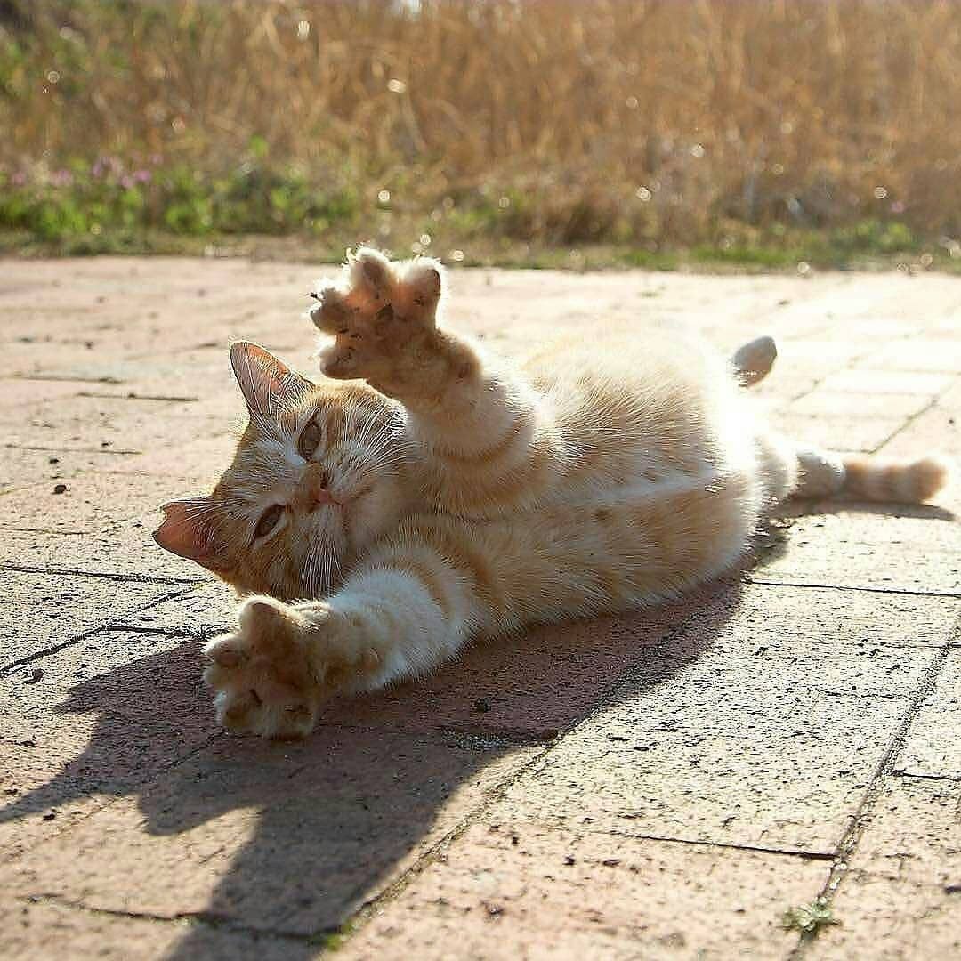 I Wanna Hug You Aww Cute Animals Cats Dogs
