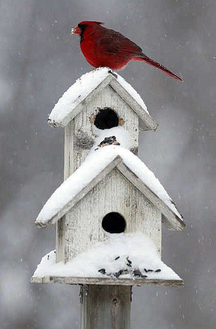 Oh My Birdhouse With Snow Little Red Bird Reminds Me Of Christmas Past Beautiful Birds Bird Houses Cardinal Birds
