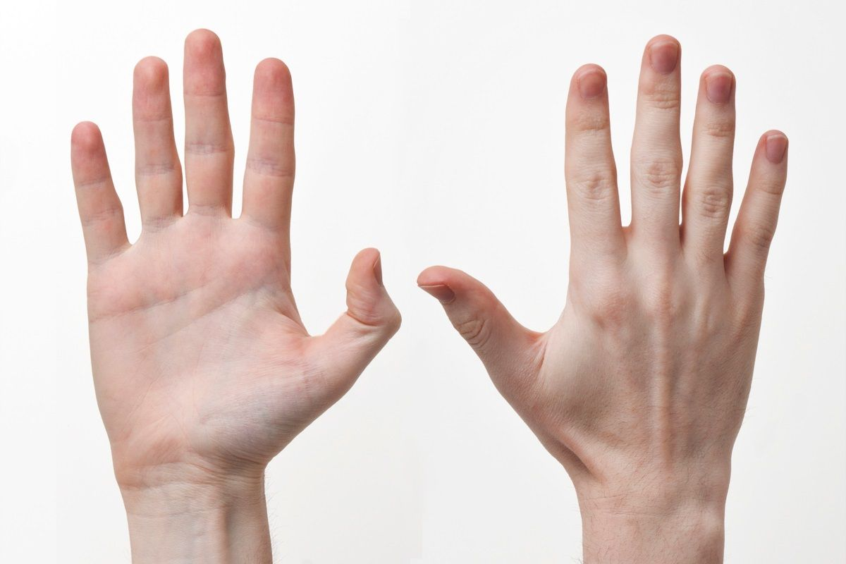 Humans have a distinctive hand anatomy that allows them to make and ...