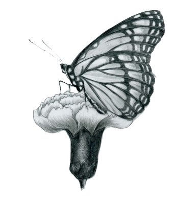 Female Monarch Butterfly Drawing | Drawings - Monarch ...