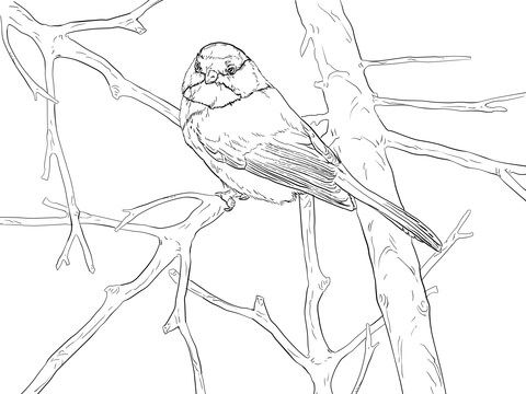 Black Capped Chickadee Songbird Coloring Page From Chickadee