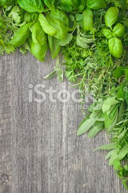 Fresh herbs over grey wooden Zdjęcie royalty-free