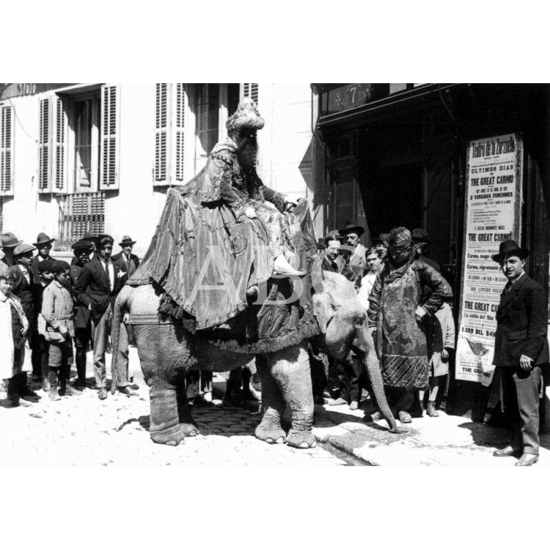 Madrid, 1921. Animales que se utilizaban para la publicidad.