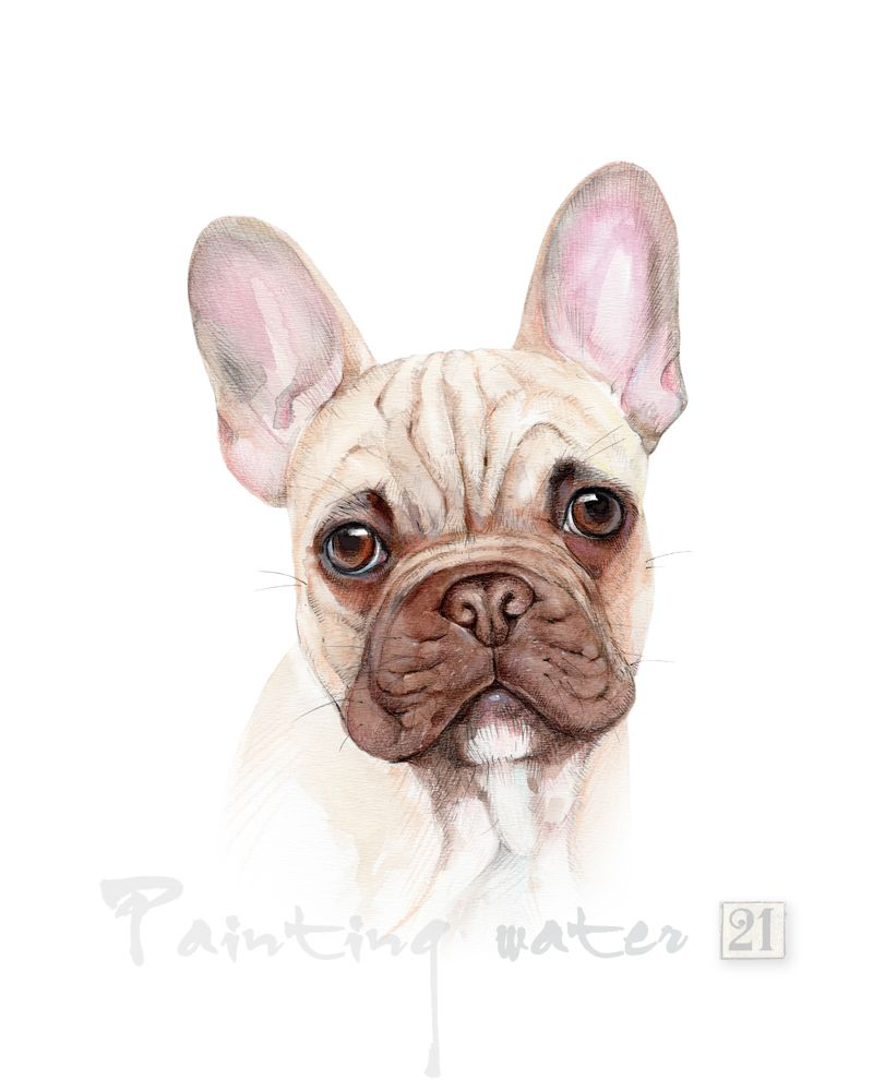 French Bulldog Art Print Fawn French Bulldog Decor Etsy French Bulldog Art Bulldog Art Bulldog Art Print