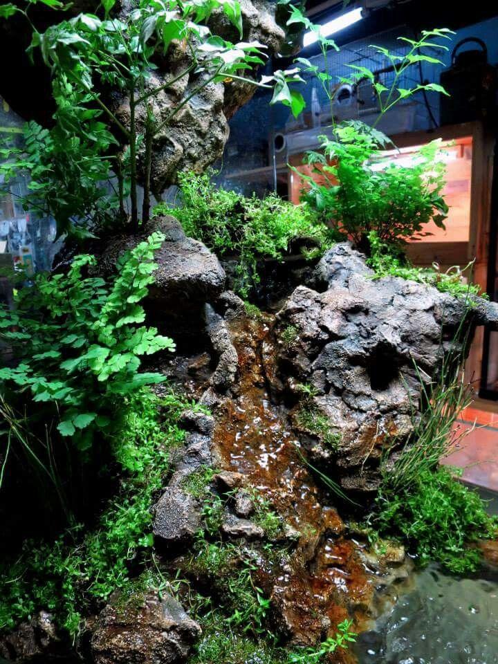 1000 Ideas About Gecko Vivarium On Pinterest