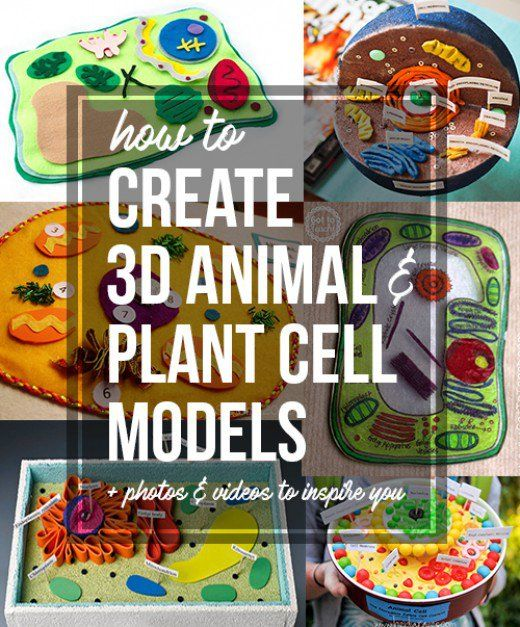 how to build an animal cell model