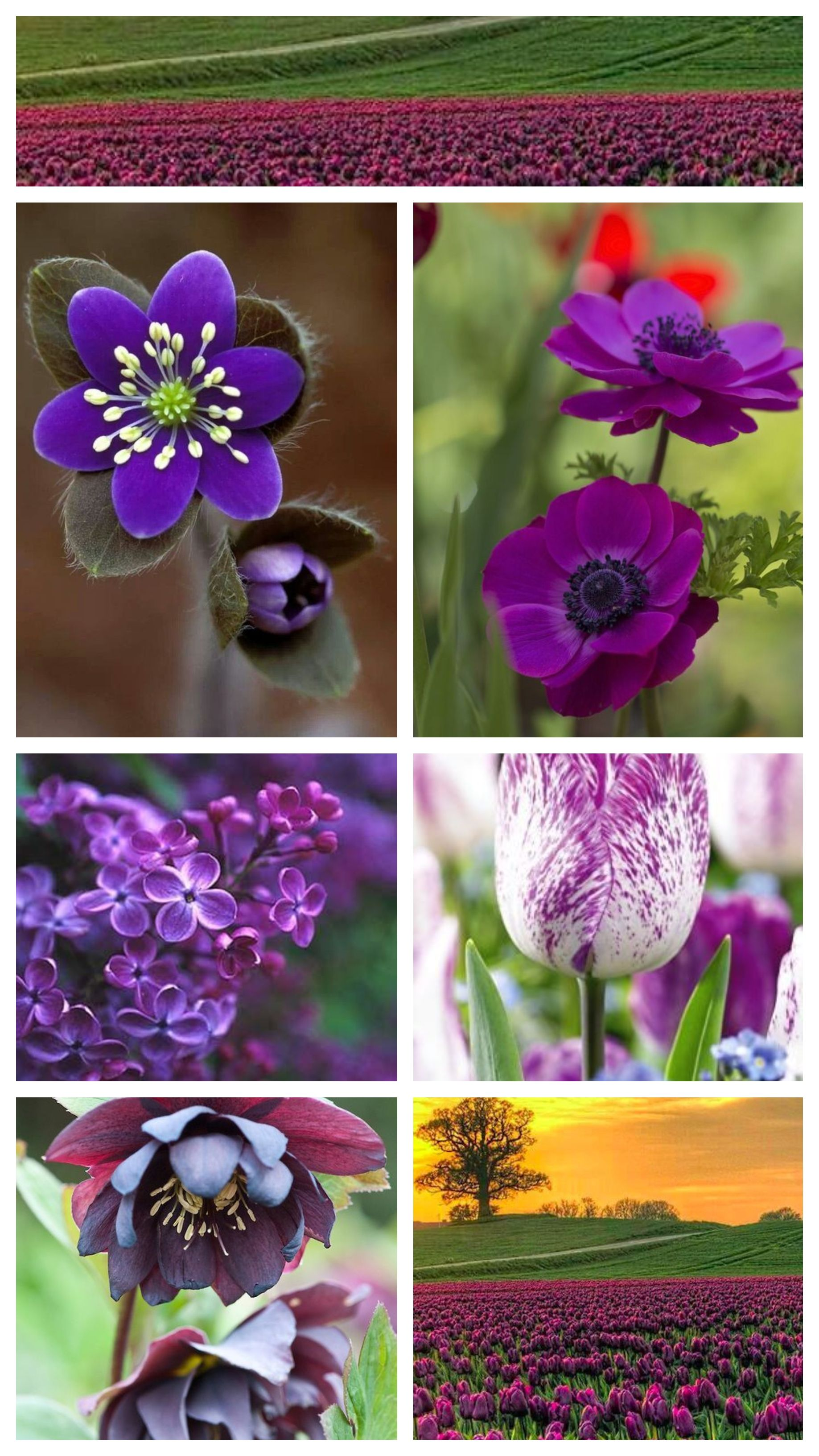 Best 25 Beautiful Purple Flowers For Your Garden Pinterest