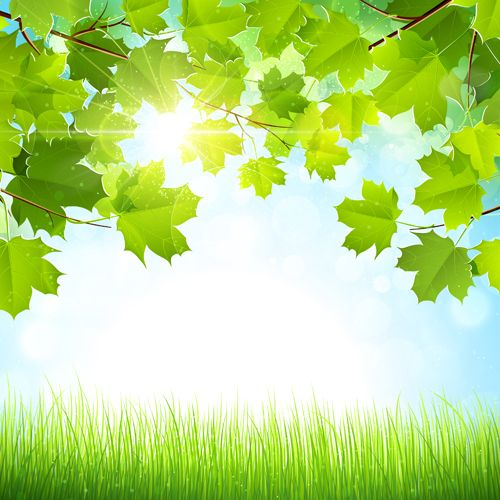 Sunlight With Nature Background Art Vector Green Leaf Background Leaf Background Green Backgrounds
