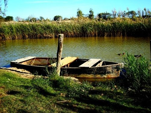Lo riu es vida!!! Som la sal de la terra. I no una terra de sal.