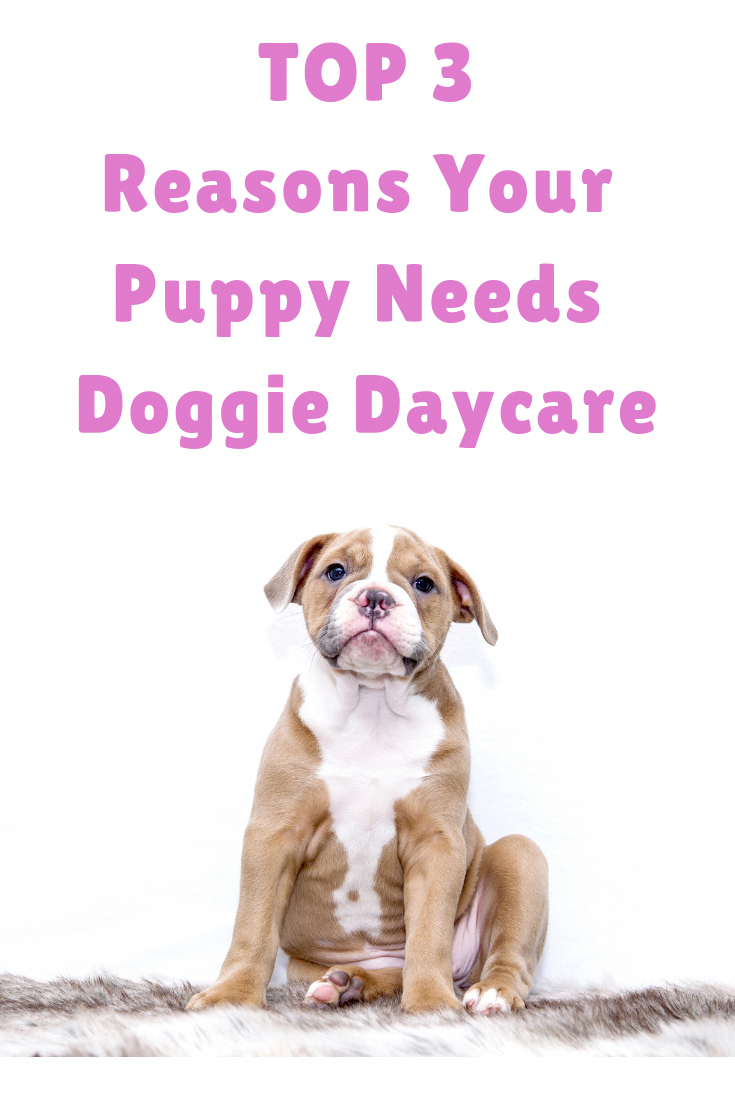 Affordable Dog Training Nyc CanDogsEatMango Dog daycare