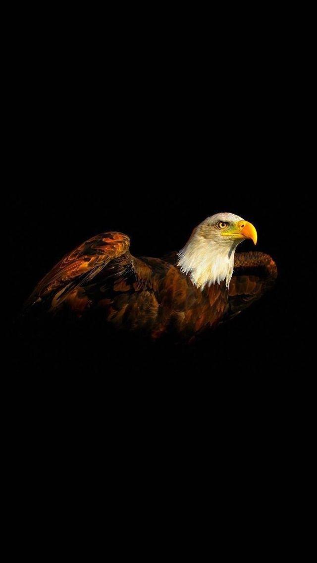 1 Iphone 5 Wallpaper Photo Animal Eagle Wallpaper Eagle