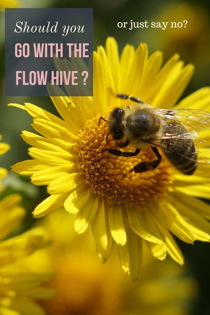 The Flow Hive-Beekeepers | Flow hive, Bee keeping ...