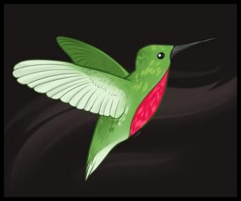 How to Draw Hummingbirds, Step by Step, Birds, Animals ...