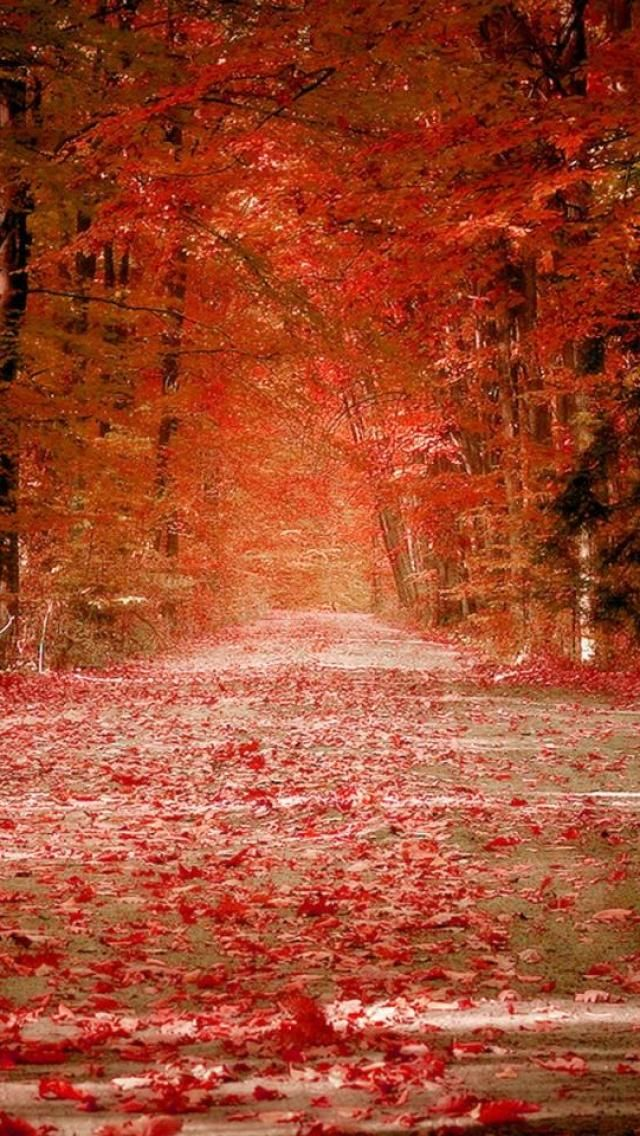 fall wallpaper iphone fall autumn leaves forest landscape nature hd iphone 10575