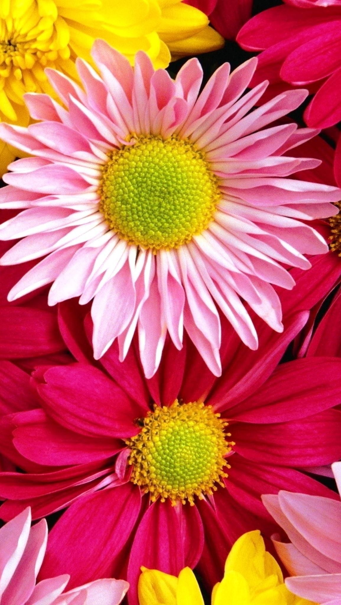 Iphone Wallpaper Flower Backgrounds Colorful Flowers Happy Flowers