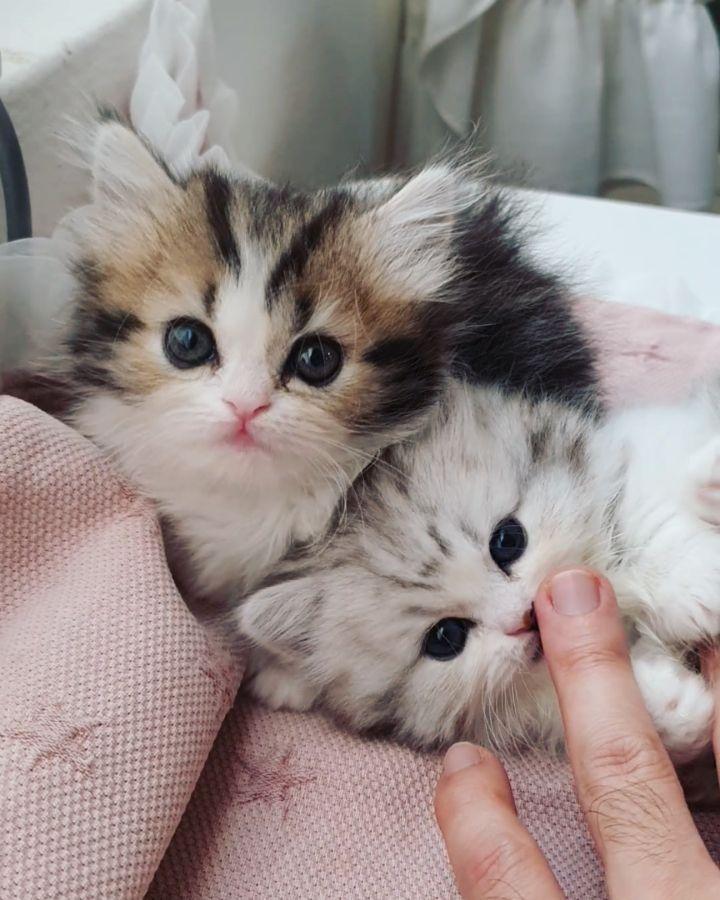 NEW14-Trendy-cat-diy-large-2019-Page-5of7   너무 사랑스럽 역시 냥이는 성격이 중요 벌러덩 그루밍에 말이 필요없는 귀여움 . . . . . . #猫 #ねこ #ilovecats #withcat #owlcat #mycat #meow #instacat #kitten #munchkincats #munchkinkitten #catofinstagram #catoftheday #nekostagram #catstagram #pet #neko #babycat #catlover #cats #munchkin #냥스타그램 #강남고양이분양 #먼치킨고양이분양 #먼치킨분양 #먼치킨숏레그