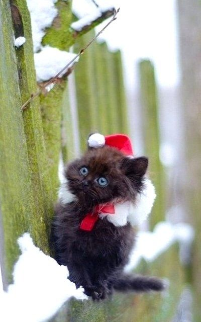 So where's Santa?