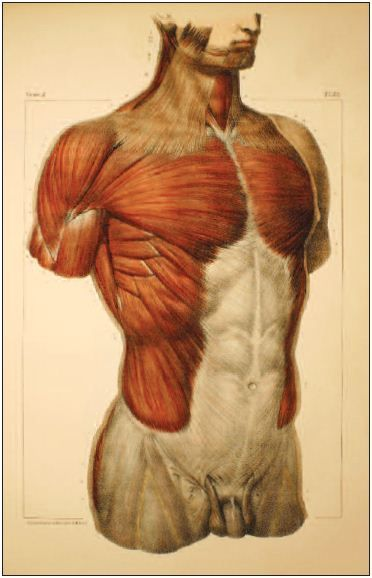 Illustrated Anatomical Atlas By Jean Marc Bourgery And Claude
