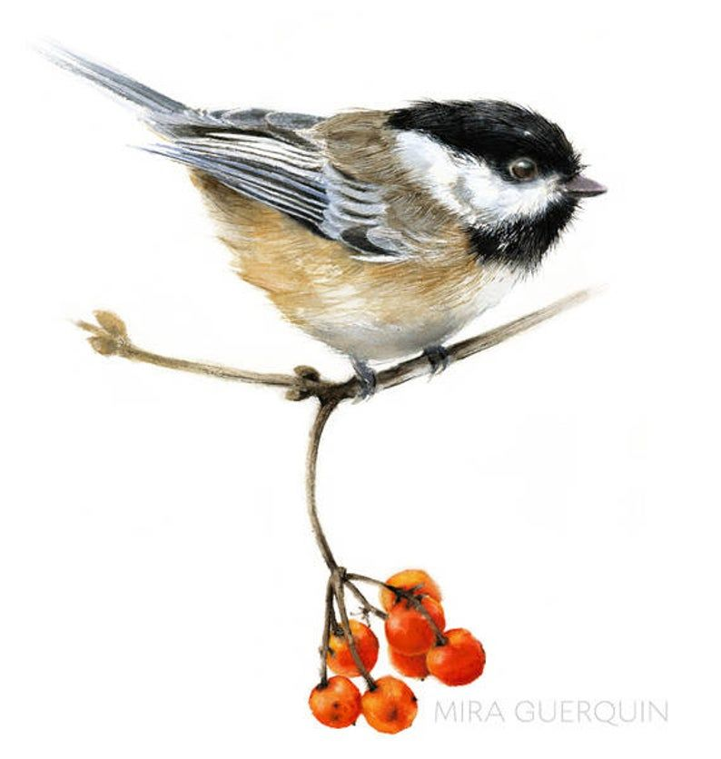 Chickadee Perched on a Branch with Red Berries  – Watercolor Giclee Print Bird Illustration