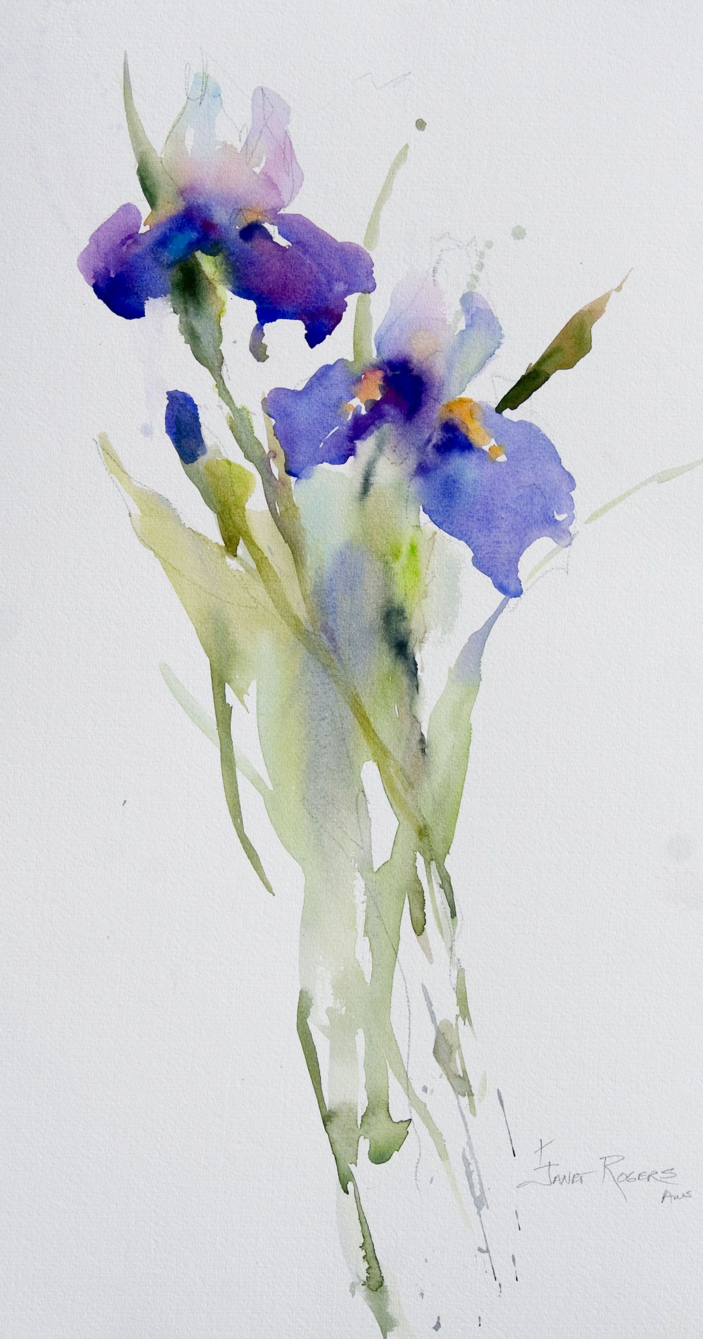 Janet Rogers Irises Watercolor Flowers Paintings Iris Painting