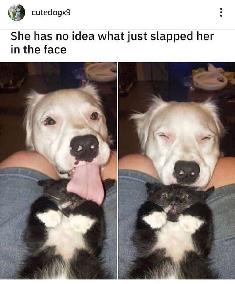 Forty Four Miscellaneous Memes Full Of Dumb Humor Cute Funny Animals Funny Animals Animal Memes