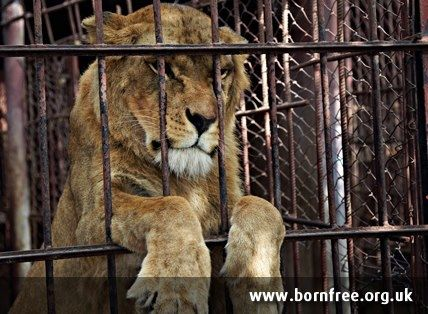 Pin On Why I Don T Go To Circuses Or Some Zoos