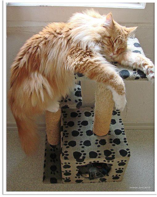 Yoga Schlafposition für Katzen - yoga sleep position for cat | Flickr - Photo Sharing!