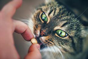 Comment donner facilement des médicaments à votre chat ?
