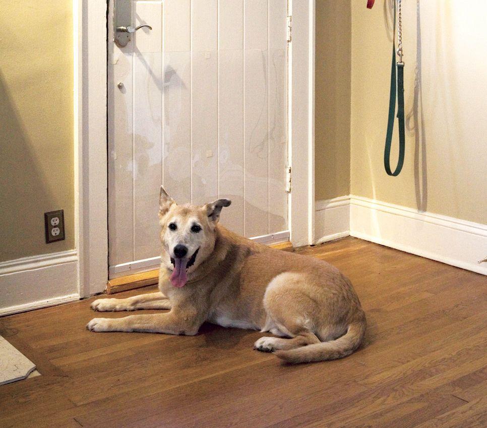 Dog Scratching Door