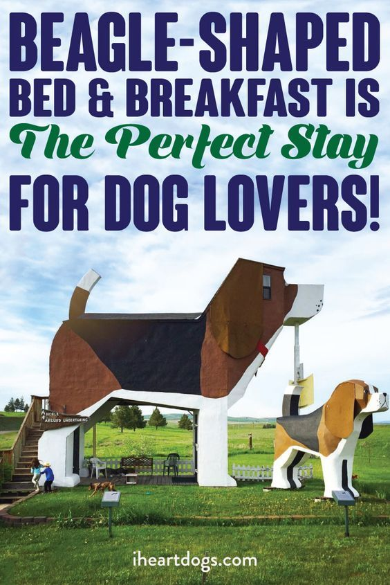 Beagle Shaped Bed Breakfast Is The Perfect Stay For Dog Lovers
