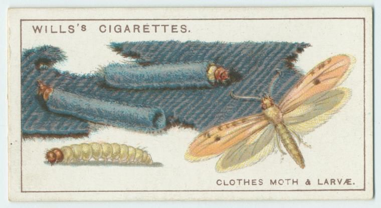 14+ Where do clothes moths come from ideas in 2021