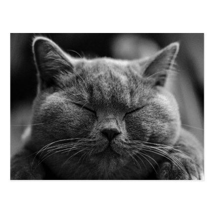 British Shorthair | Black and White | Cat Portrait Postcard - postcard post card postcards unique diy cyo customize personalize