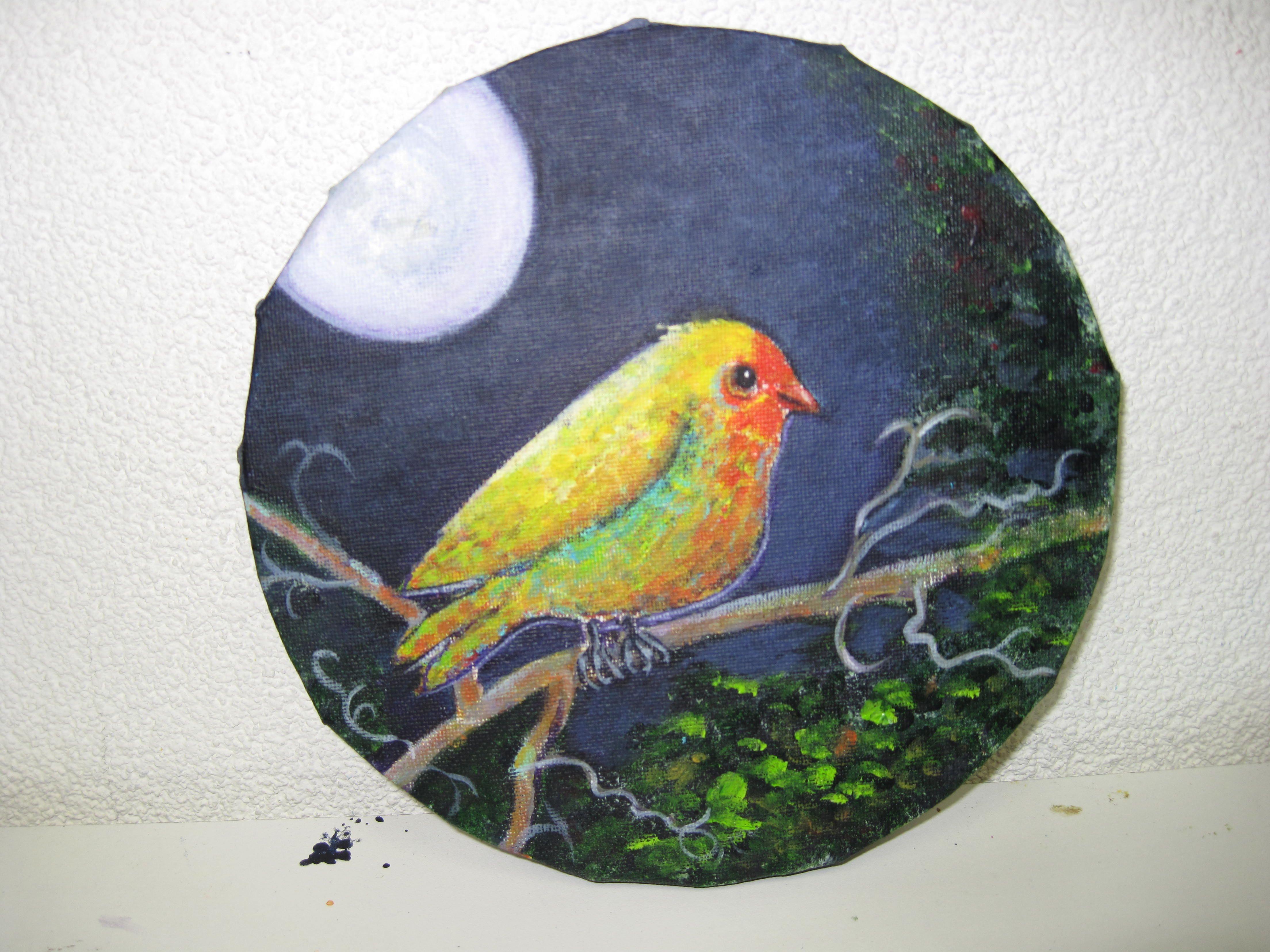 vogel in de nacht, nog niet af.
