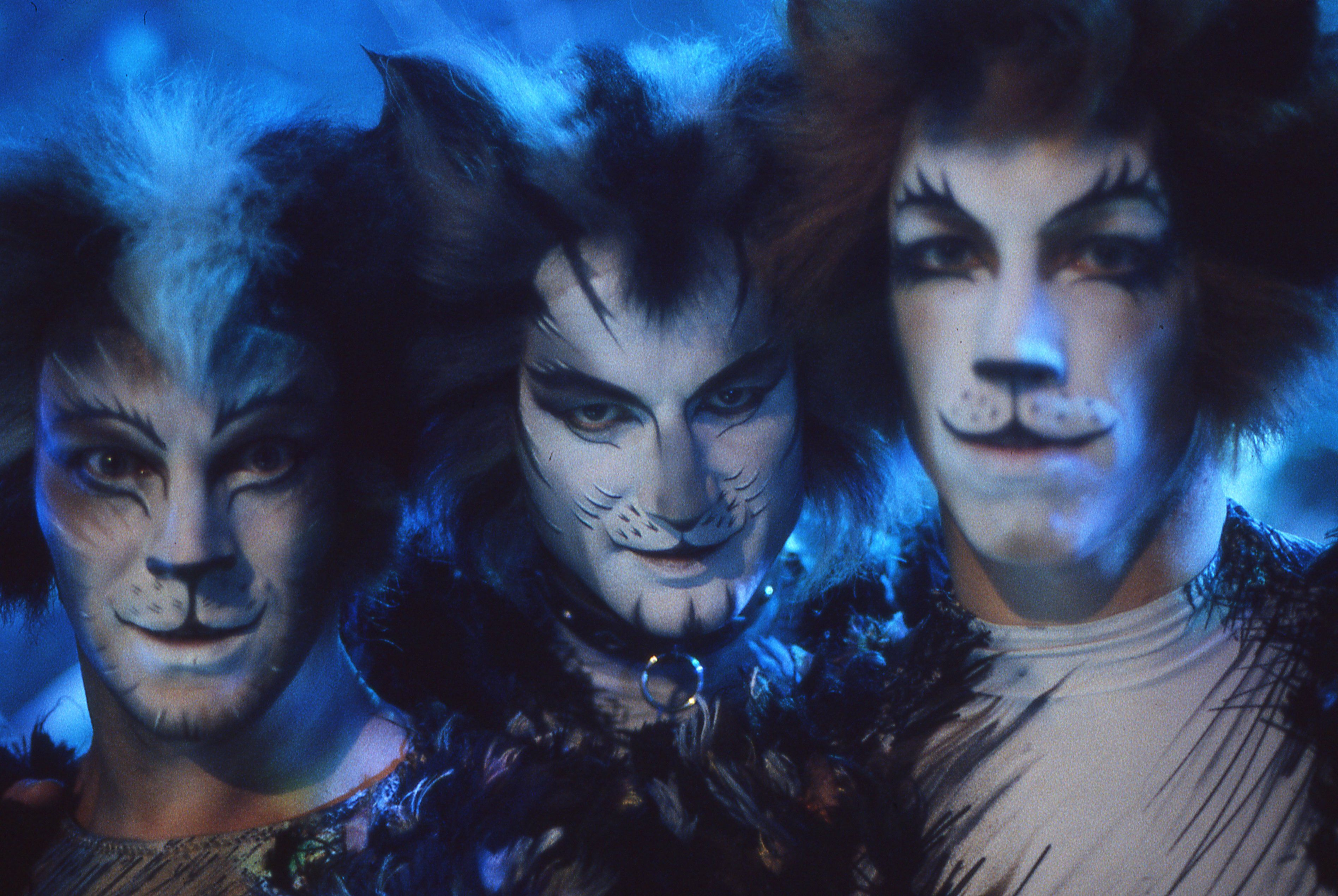 Cats on Screen Cats the Musical Why do cats purr, Cats
