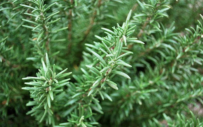 The 8 Best Herbs To Grow For A Beginner's Herb Garden 400 x 300