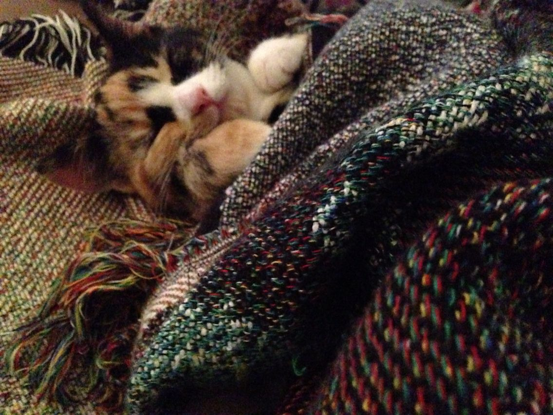 Nap time with a favourite blanket.