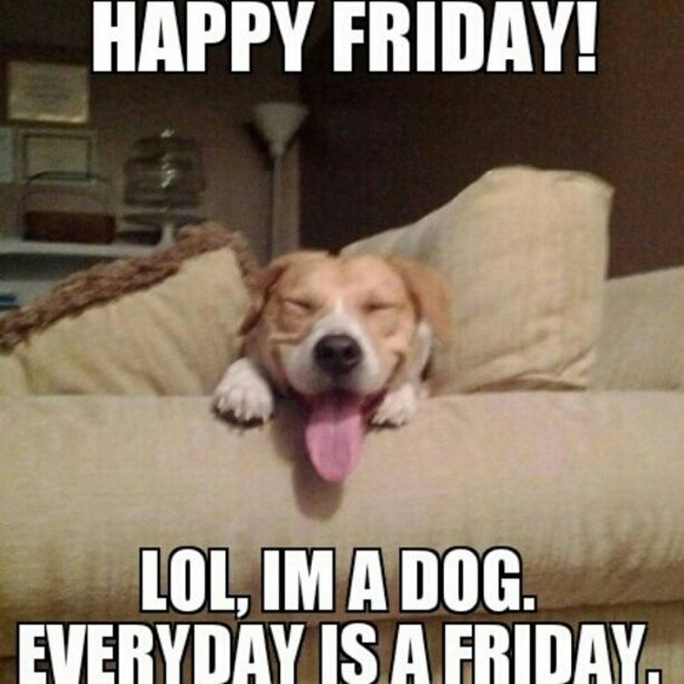 Have A Great Friday And A Fantastic Weekend Funny Puppy Memes Funny Friday Memes Funny Dog Memes